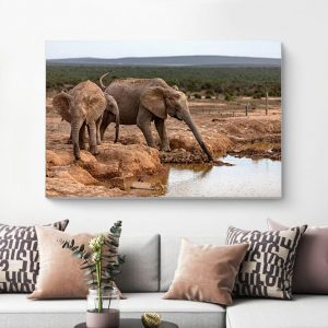 African Elephant Drinking and Playing Photography Canvas
