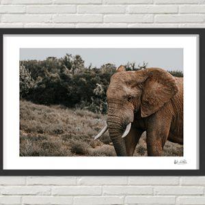 African Elephant Bull Print
